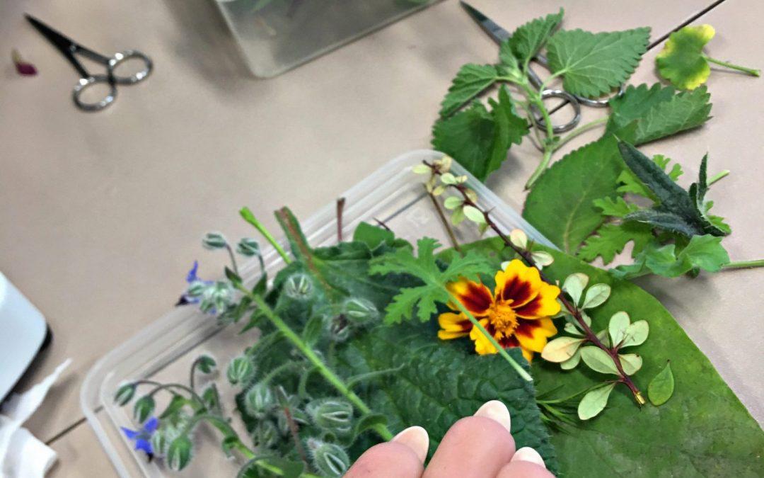 Botanika w klasie Zdrowie i farmacja