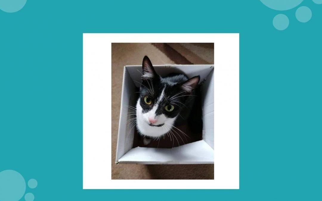 Zbiórka na rzecz Fundacji Felineus